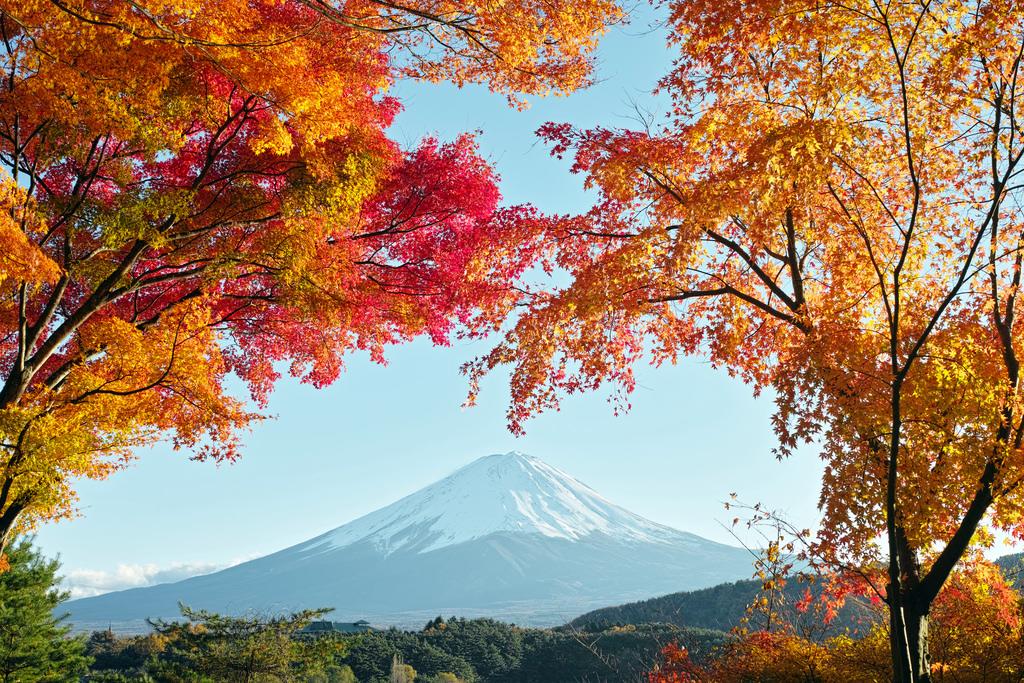 Du lịch Nhật Bản: Tokyo - Phú Sỹ - Hakone - Odaiba 4 ngày VN