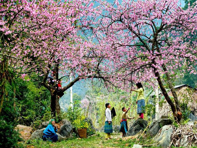 Du lịch: Hà Nội - Bái Đính - Tràng An - Đảo Kong - Hạ Long - Yên Tử  - Sapa 6 ngày