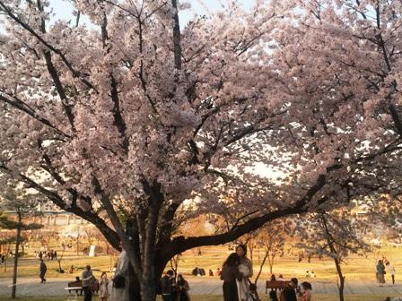 Du lịch Hàn Quốc: Seoul - Nami - Everland 5 ngày, OZ