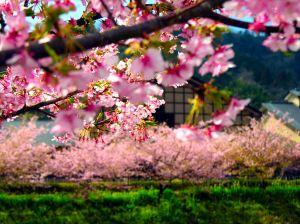 Dạo bước cùng ngắm những  ngôi làng đẹp nhất nước Nhật