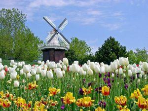 Du lịch Châu Âu: Pháp - Bỉ - Hà Lan 7 ngày TK