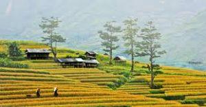 Du lịch Hà Nội - Mai Châu - Mộc Châu 2 ngày