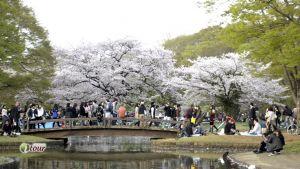 Du lịch Hà Quốc: Seoul - Jeju - Yeouido - Everland - Nami - hoa Anh Đào xứ Kim Chi 6 ngày