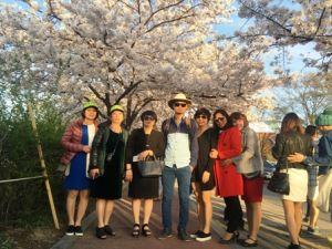 Du lịch Hàn Quốc mùa hoa Anh Đào, 5 ngày bay 7C