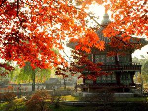 Du lịch Hàn Quốc - Seoul - Jeju - Everland 5 ngày