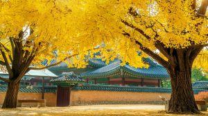 Du lịch Hàn Quốc: Khám phá đảo Jeju 4 ngày 7C