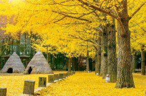 Du lịch Hàn Quốc: Seoul - Jeju - Nami - Everland, 6 ngày, OZ