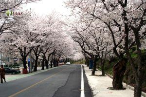 Du lịch Hàn Quốc: Seoul - Lotte World - Morning Calm - Trượt Tuyết 5 ngày (EZ)