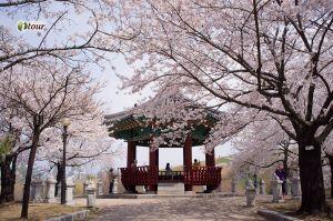 Du lịch Hàn Quốc: Seoul - Nami - công viên Yeouido - Everland 5 ngày (EZ)