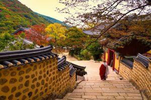 Du lịch Hàn Quốc: Seoul - Nami - Everland 6 ngày VN