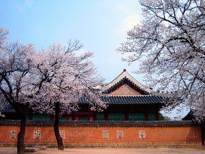 Du lịch Hàn Quốc: Seoul - Nami - Everland, bay VN ban ngày