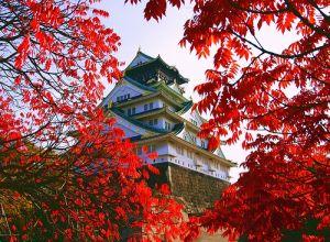 Du lịch Nhật Bản cung đường vàng: Tokyo - Osaka - Kyoto 6 ngày