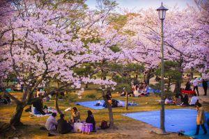 Du lịch Nhật Bản: Tokyo - Yokohama 5 ngày