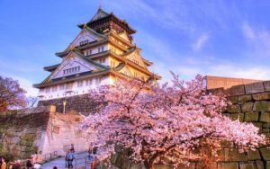 Du lịch Nhật Bản - Ngắm hoa Anh Đào 7 ngày