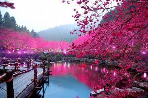 Du lịch Nhật Bản: Toykyo - Phú Sỹ - Kyoto - Osaka 6 ngày CI