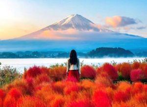 Du lịch Nhật Bản: Mùa Hoa Anh Đào Tokyo–Kyoto–Osaka, 6 ngày bay VN